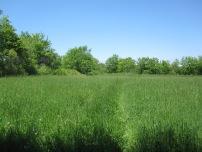 Field #3 in June