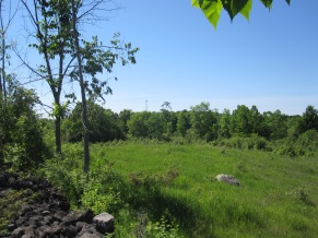 One of three grazing fields