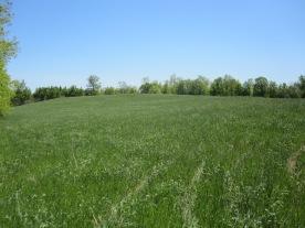 Field #4 in spring