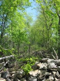 Treeline between two fields