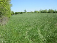 Field #4 in early spring