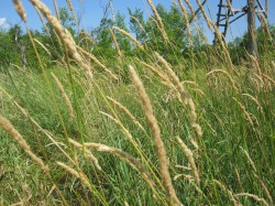 Thick golden grass adjacent to the creek