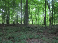 Dense forest at the rear of property