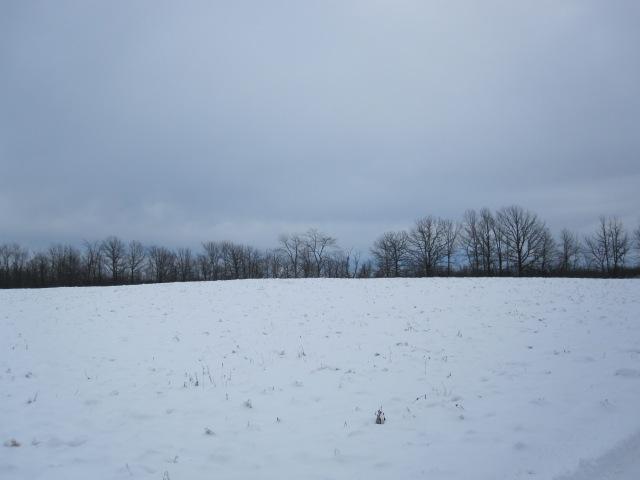 Field 2(2)