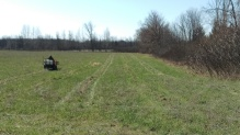 Walnut orchard being prepared for planting