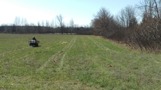 The field which will house the walnut orchard was prepared and sprayed to ensure that the saplings will have a chance to root and grow against any grasses, weeds, or invasive species