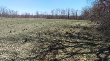 Future pine forest in the making