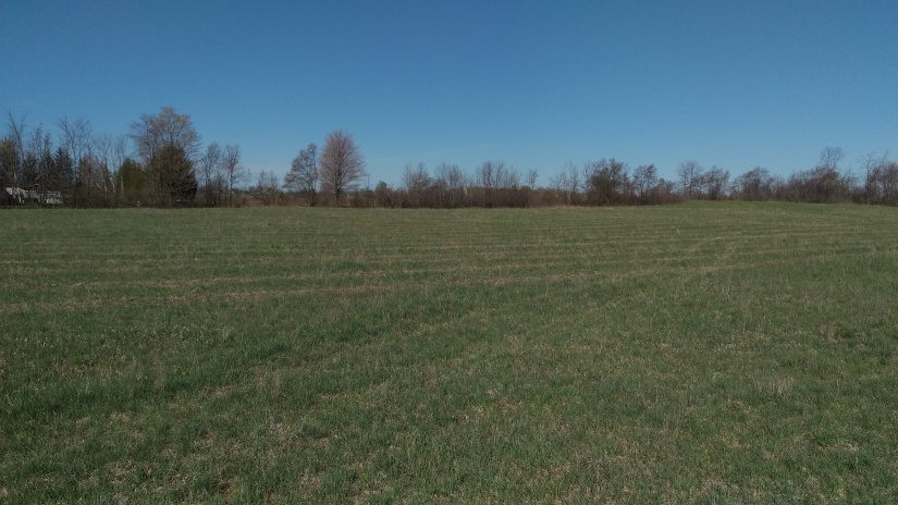 You can see the orchard rows running north to south.