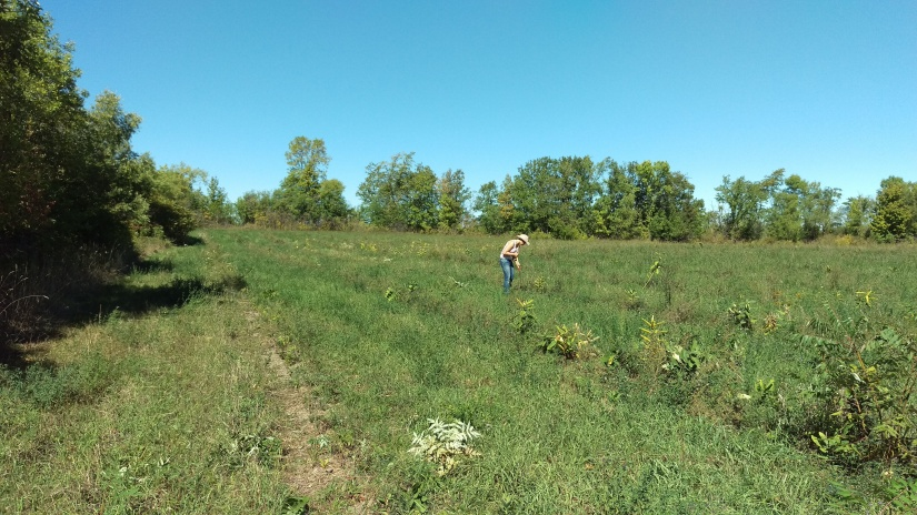 We will be spending the good part of the fall weeding and maintaining the orchard to keep weeds at bay.
