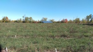The walnut orchard is now prepared for winter