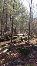 Eastern edge of the property line deep in the forest
