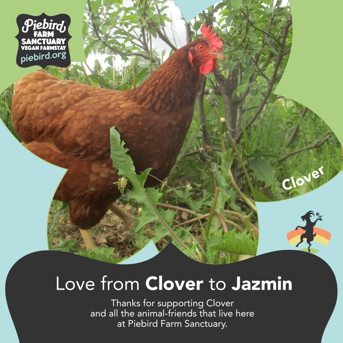 clover_jazmin_piebird