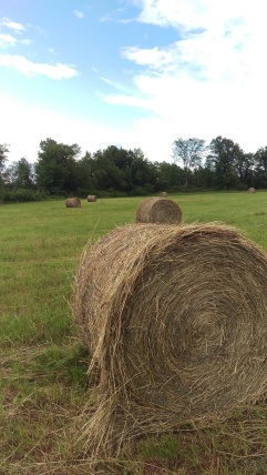 Harvesting and baling hay