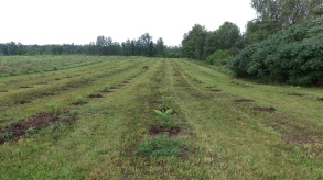 Cut, trimmed, and mulched...