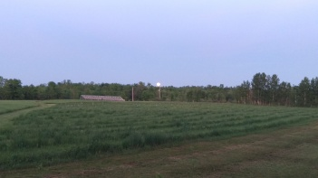 Evening at the farm